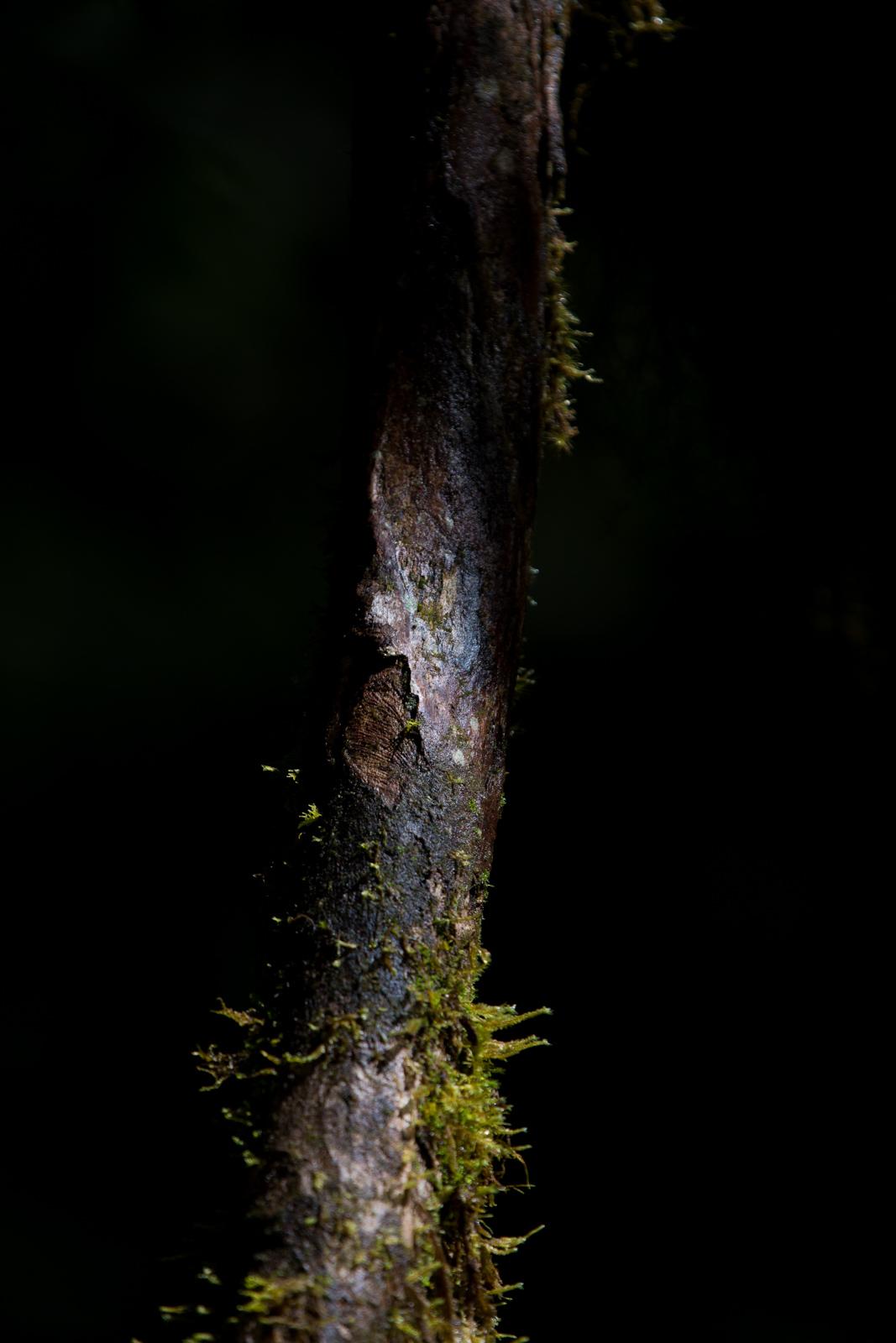 Nature-28