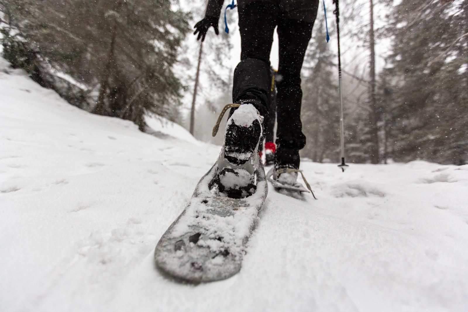 Snowshoe-2